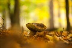 Feche acima do tiro de um cogumelo na terra da floresta Fotos de Stock