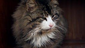 Feche acima do tiro de um gato doméstico vídeos de arquivo