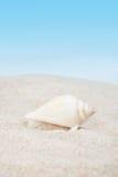 Seashell puro no Sandy Beach Foto de Stock Royalty Free