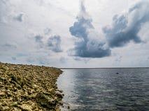 Feche acima do tiro dos fragmentos corais inoperantes que encontram-se em uma praia no re Imagem de Stock