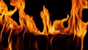 Feche acima do tiro do movimento lento da chama alaranjada de madeira do fogo surpreendente que queima-se na chaminé satifsying d filme
