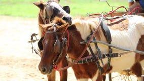 Feche acima do transporte puxado por cavalos na exploração agrícola video estoque