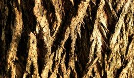 Feche acima do tronco de árvore do sal para um fundo Fotos de Stock