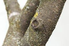 Feche acima do tronco de uma árvore Fotos de Stock Royalty Free