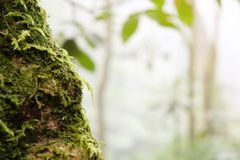 Feche acima do tronco de uma árvore caída coberta com o musgo na luz solar brilhante imagens de stock royalty free