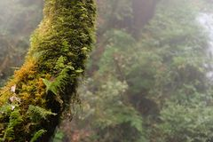 Feche acima do tronco de uma árvore caída coberta com o musgo na luz solar brilhante foto de stock
