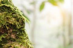 Feche acima do tronco de uma árvore caída coberta com o musgo na luz solar brilhante imagem de stock royalty free