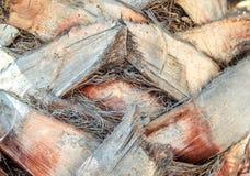Feche acima do tronco do teste padrão da textura do fundo da superfície da palmeira imagens de stock