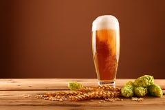 Feche acima do vidro, dos lúpulos e da cevada de cerveja sobre o marrom imagem de stock