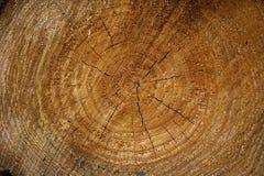 Feche acima dos anéis de crescimento circulares da árvore fotografia de stock royalty free
