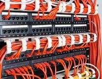 Feche acima dos cabos vermelhos da rede conectados ao interruptor Imagem de Stock Royalty Free