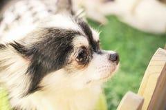 Feche acima dos cachorrinhos bonitos na gaiola Fotos de Stock