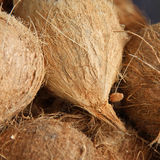 Feche acima dos cocos orgânicos no mercado local. Profundidade de campo rasa Imagens de Stock Royalty Free