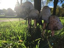 Feche acima dos cogumelos Imagens de Stock