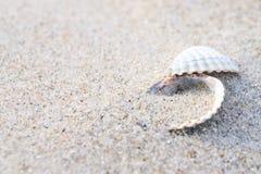 Feche acima dos escudos de um mar na areia foto de stock royalty free