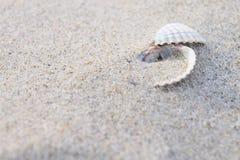 Feche acima dos escudos de um mar na areia imagens de stock
