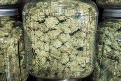 Feche acima dos frascos de vidro enchidos com os botões verdes da marijuana Fotografia de Stock