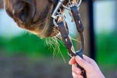 Feche acima dos freios do cavalo imagens de stock royalty free
