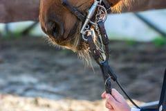 Feche acima dos freios do cavalo imagens de stock