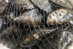 Feche acima dos mexilhões do alimento de mar na rede de empacotamento imagem de stock royalty free