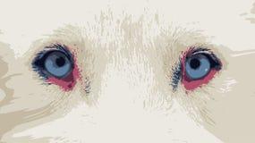 Feche acima dos olhos azuis do cão de puxar trenós siberian vectorized ilustração stock