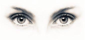 Feche acima dos olhos cinzentos no fundo branco Imagens de Stock