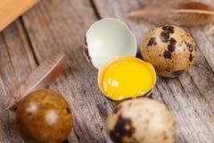 Feche acima dos ovos de codorniz Imagens de Stock