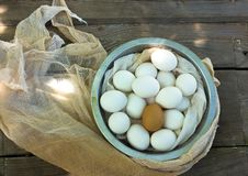 Feche acima dos ovos em uma curva Fotografia de Stock