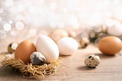 Feche acima dos ovos frescos diferentes no ninho sobre o fundo do bokeh fotografia de stock