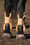 Feche acima dos pés do cavalo Foto de Stock