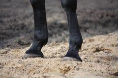 Feche acima dos pés do cavalo Fotos de Stock Royalty Free