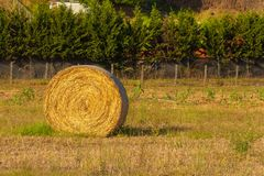 Feche acima dos pacotes de feno, cena rural no verão Imagem de Stock Royalty Free