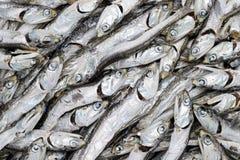 Feche acima dos peixes pequenos secados Foto de Stock Royalty Free