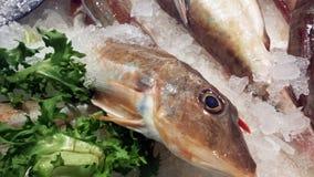 Feche acima dos peixes vermelhos do bacamarte no mercado Foco nos peixes Foto de Stock