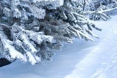 Feche acima dos ramos de árvore do abeto cobertos com a neve Imagens de Stock Royalty Free