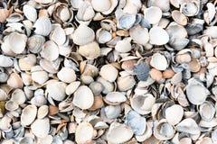feche acima dos shell do mar foto de stock