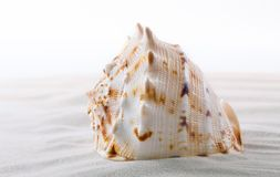 Feche acima dos shell do mar na praia Foto de Stock Royalty Free