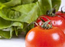 Feche acima dos tomates Imagens de Stock Royalty Free