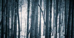 Feche acima dos troncos de árvores assustadores na floresta da queda Fotografia de Stock Royalty Free