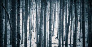 Feche acima dos troncos de árvores assustadores na floresta da queda Imagem de Stock Royalty Free
