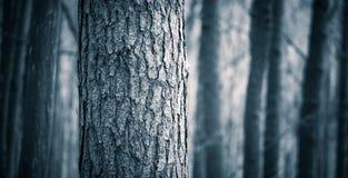 Feche acima dos troncos de árvores assustadores na floresta da queda Imagens de Stock