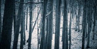 Feche acima dos troncos de árvores assustadores na floresta da queda Imagem de Stock