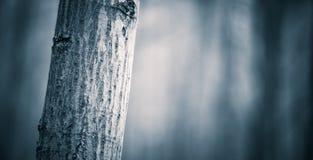 Feche acima dos troncos de árvores assustadores na floresta da queda Fotos de Stock