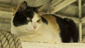 Feche acima e focalize na cara do gato Fotografia de Stock