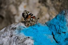 Feche acima em uma borboleta bonita que descansa em uma rocha imagens de stock