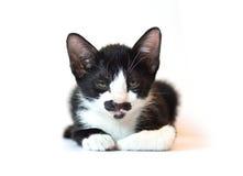 Feche acima, gatinho preto e branco Fotografia de Stock Royalty Free
