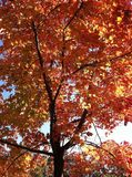 Feche acima na árvore na queda imagem de stock