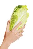 Feche acima na mão fêmea que guarda uma couve Imagem de Stock