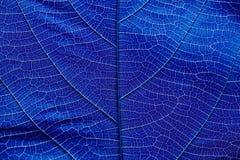 Feche acima na obscuridade - textura azul da folha Fotografia de Stock Royalty Free