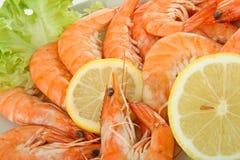 Feche acima no camarão Imagens de Stock Royalty Free